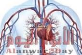 6 أطعمة تساعد على تنظيف شرايين القلب