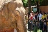 نفوق الفيل الأكثر حزنا في العالم بأسبانيا بسبب الاكتئاب