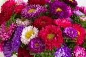 همس الزهور